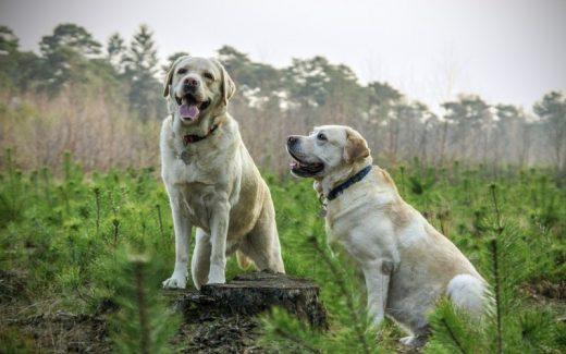 Essential hundefoder