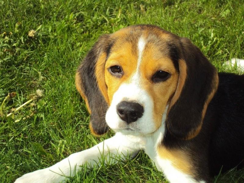 Hundehalsbånd fra Hunter