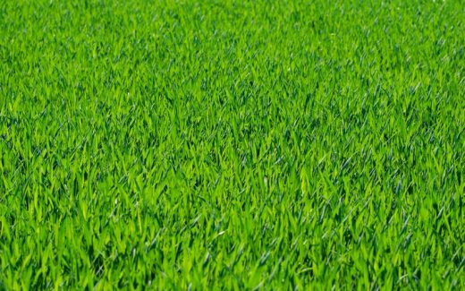 Få hurtigt en flot græsplæne ved det nybyggede hus med rullegræs