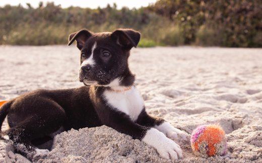 Husker du at lege med din hund?
